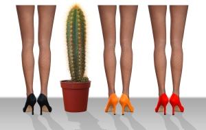 cactus legs
